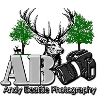 Photography by Andy Beattie