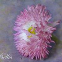Fine art prints by Rina