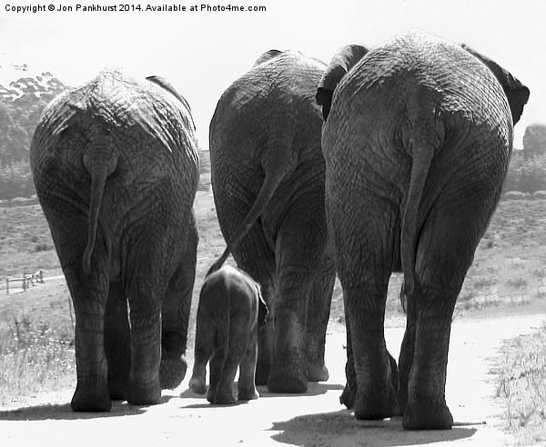 Elephants bums Canvas print by Jon Pankhurst