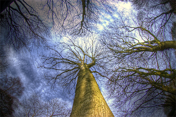 Blue sky and trees Canvas print by Jon Pankhurst