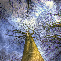 Buy canvas prints of Blue sky and trees by Jon Pankhurst