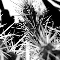 Buy canvas prints of Spikey Cactus by Jon Pankhurst