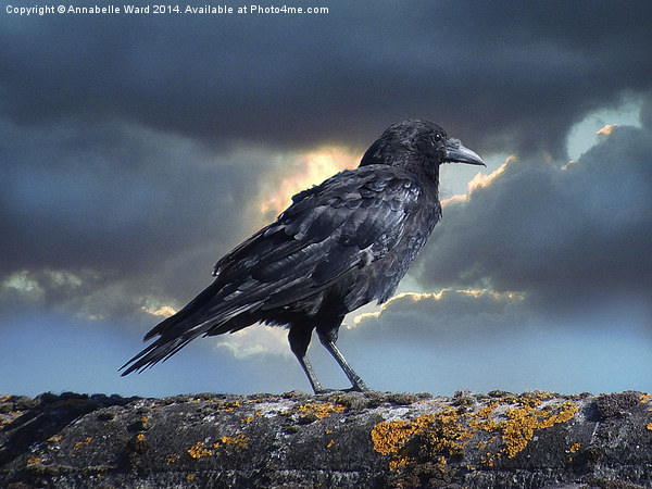 Rook on the Roof. Canvas print by Annabelle Ward