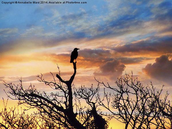 Corvus Sunset Canvas print by Annabelle Ward