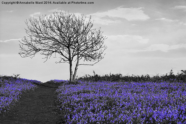 Bluebells On Monochrome Canvas print by Annabelle Ward