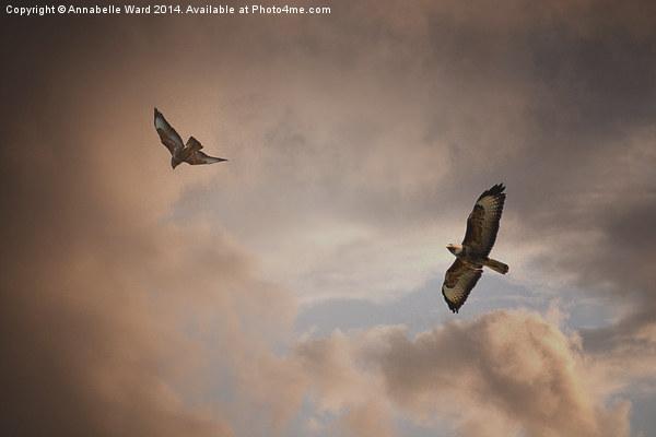 Buzzard In Flight Canvas print by Annabelle Ward