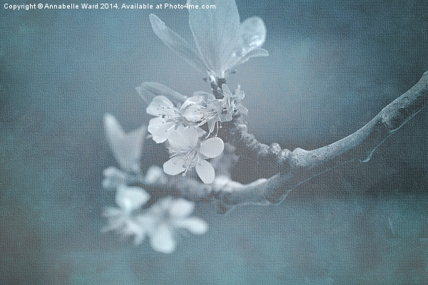 Apple Blossom Blues. Canvas print by Annabelle Ward