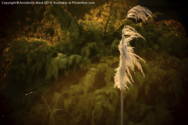 The Grass Whispers. Canvas print by Annabelle Ward