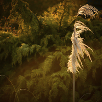 Buy canvas prints of The Grass Whispers. by Annabelle Ward