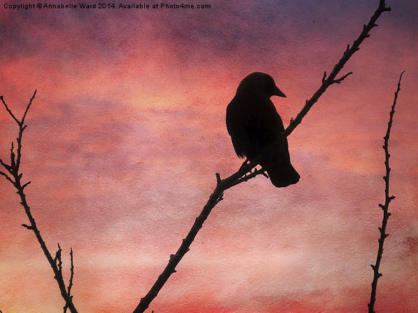 Jackdaw Sunset. Canvas print by Annabelle Ward