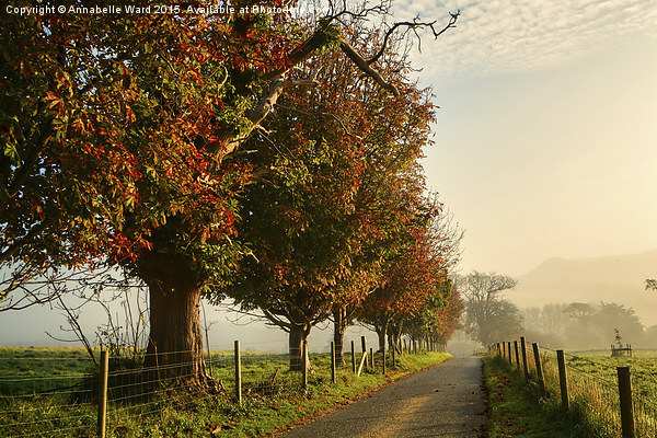 Autumn Morning Amble. Canvas print by Annabelle Ward