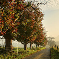 Buy canvas prints of  Autumn Morning Amble. by Annabelle Ward