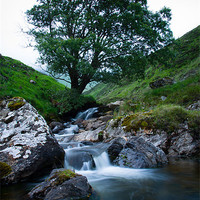 Buy canvas prints of Glenshee Tree by craig beattie