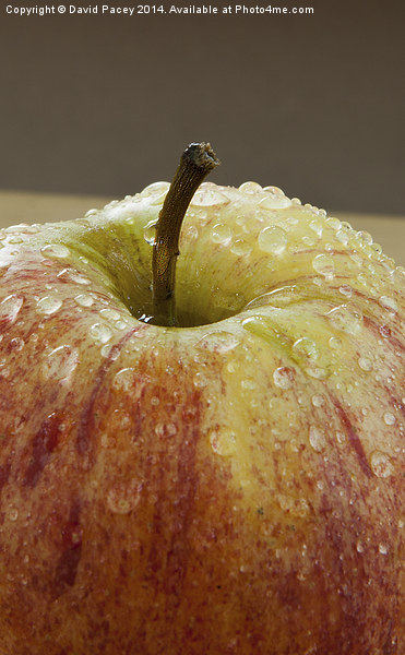 Apple (2) Canvas Print by David Pacey