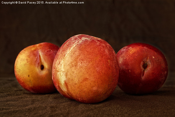 Plums Canvas Print by David Pacey
