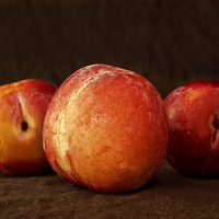 Buy canvas prints of  Plums by David Pacey