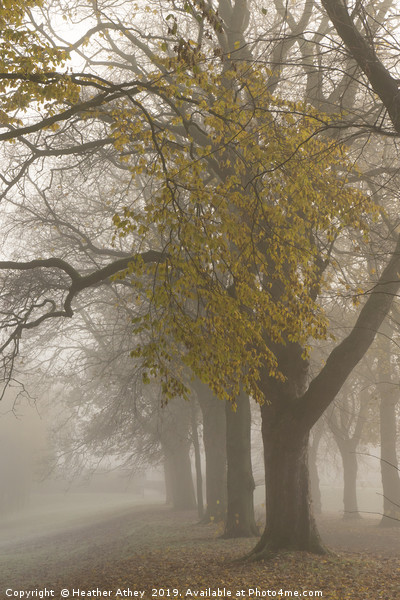 Autumn mists Canvas print by Heather Athey