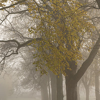 Buy canvas prints of Autumn mists by Heather Athey