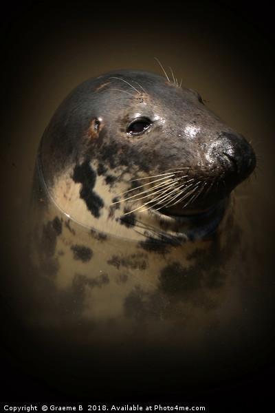 Portrait of a Seal Canvas print by Graeme B