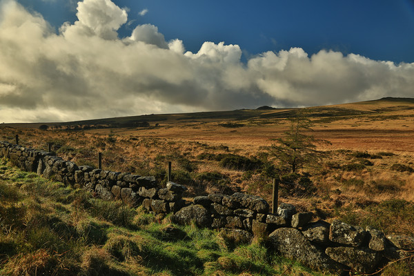 Dartmoor wall Canvas Print by Dave Bell