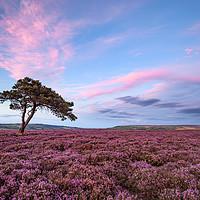 Buy canvas prints of Egton Moor Heather by Martin Williams