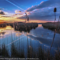 Buy canvas prints of Reeds & Reflections by mhfore Photography