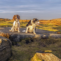 Buy canvas prints of Dogs A K-9 View by mhfore Photography