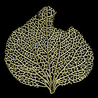 Buy canvas prints of Skeleton Leaf by Mark Campion