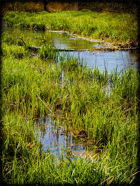 River Kennet Marshes Canvas print by Mark Llewellyn