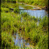 Buy canvas prints of River Kennet Marshes by Mark Llewellyn