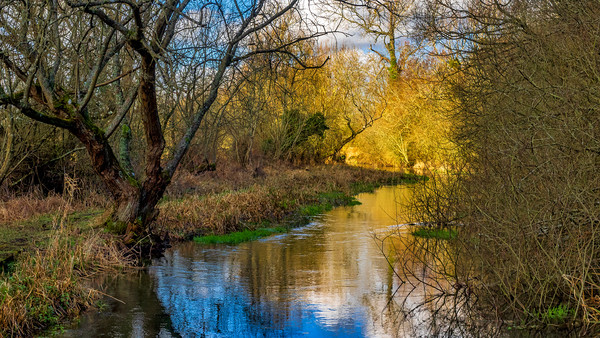 Berkshire Stream Canvas print by Mark Llewellyn