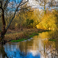 Buy canvas prints of Berkshire Stream by Mark Llewellyn