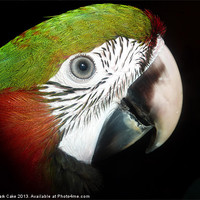 Buy canvas prints of Young macaw eye by Mark Cake