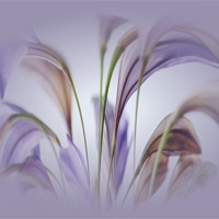 Buy canvas prints of Freesia vignette by Mark Cake