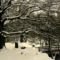 Buy canvas prints of Frozen Trees by carl wood