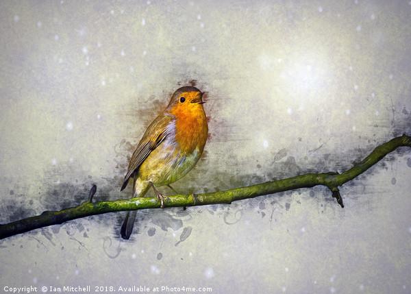 Winter Robin Canvas print by Ian Mitchell