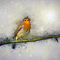 Buy canvas prints of Winter Robin by Ian Mitchell