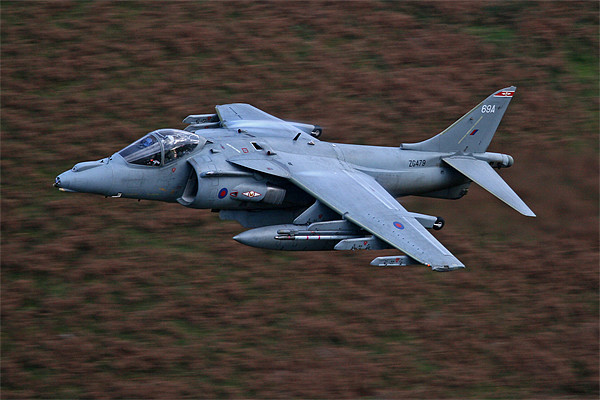 Harrier low level Canvas print by Rachel & Martin Pics