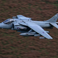 Buy canvas prints of Harrier low level by Rachel & Martin Pics