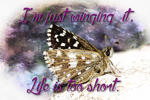 Life it too short Canvas print by J C