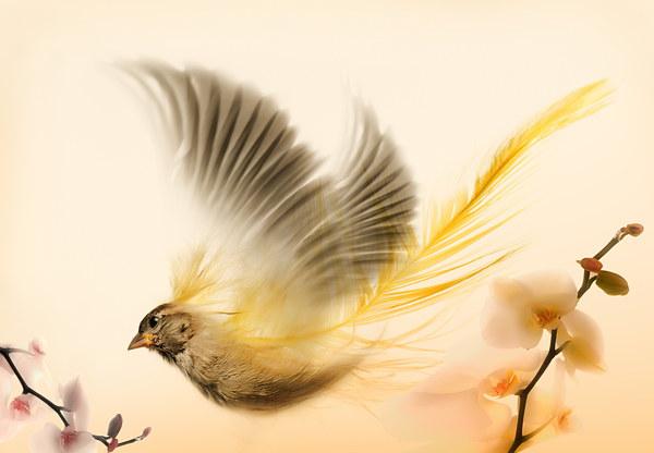 Bird art Canvas Print by Augis Skackauskas