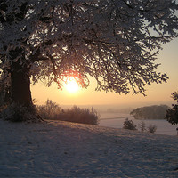 Buy canvas prints of Evening Snow by Glenn and Carol Young