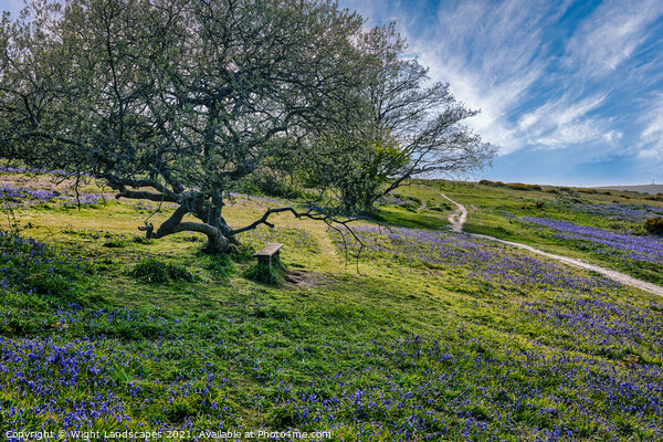 Blubell Bench Isle Of Wight Print by Wight Landscapes