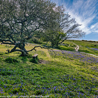 Buy canvas prints of Blubell Bench Isle Of Wight by Wight Landscapes