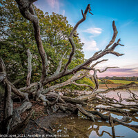 Buy canvas prints of Fallen Giant by Wight Landscapes