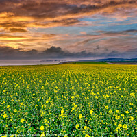Buy canvas prints of Chale Rapeseed Sunset Isle Of Wight by Wight Landscapes