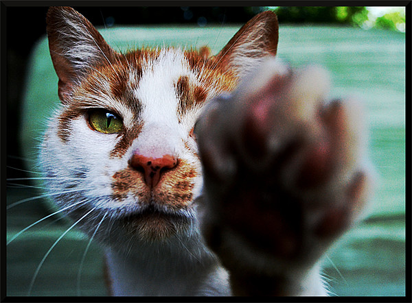 No Pictures Please! Framed Print by Laura Watton