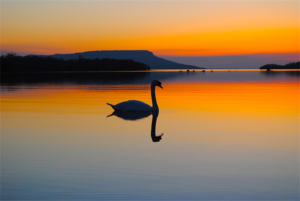 Swan Beauty Canvas print by Kim McDonell