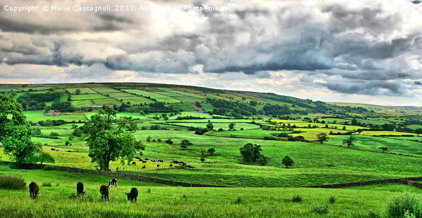 Yorkshires Grazing land  Canvas print by Marie Castagnoli