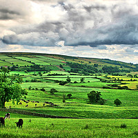 Buy canvas prints of Yorkshires Grazing land  by Marie Castagnoli